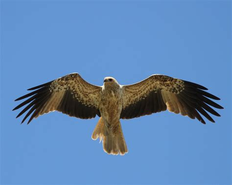 bird identification kimberley jane pryor