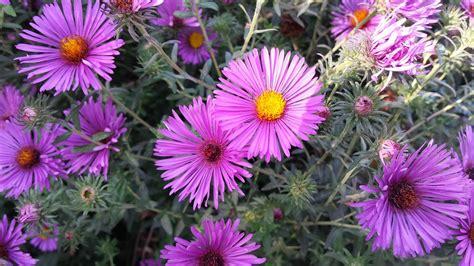 welche blumen blühen im september free photo flowers september bouquet autumn free
