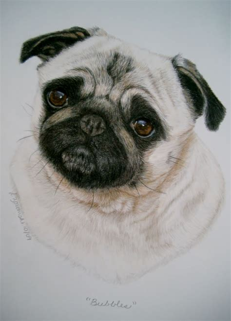 pug paint commission a realistic detailed portrait of your or other favorite pet
