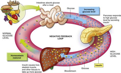 carbohydrates use in human use of the energy nutrients metabolism and balance