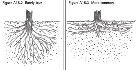 diagram tree roots choice image how to guide and refrence
