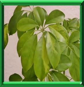 plantes vertes d interieur en ete