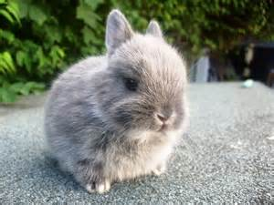 netherland rabbit colors the exle of rabbit breeds netherland all