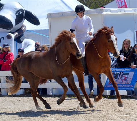 elisa wallace  mustang advocate takes  rolex expert
