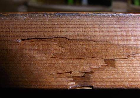 early warning signs   termite infestation