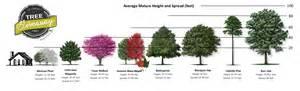 tree types image gallery tree species