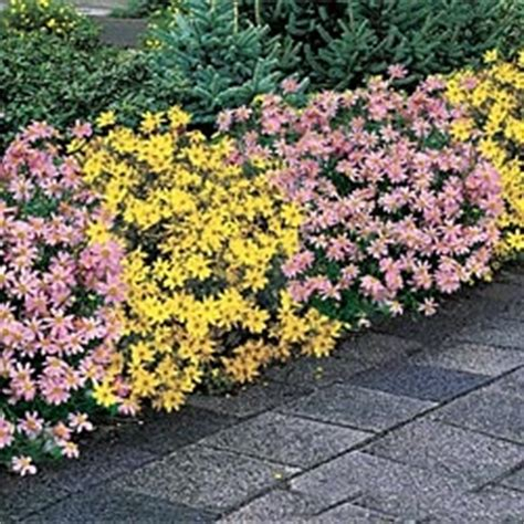 best plants for west side of house 17 best images about front walkway on pinterest gardens buxton and shrubs