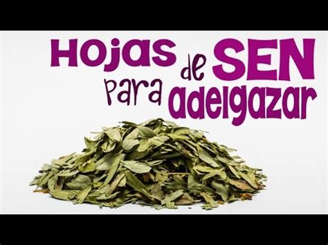 imagenes hojas de sen c 243 mo hacer una tisana de hojas de sen para depurar tu