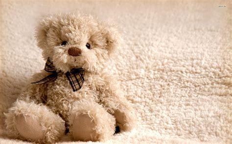 desktop wallpaper hd teddy bear teddy bear full hd wallpapers download free