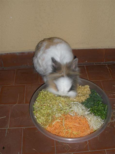 alimentazione forzata coniglio patologiedenti