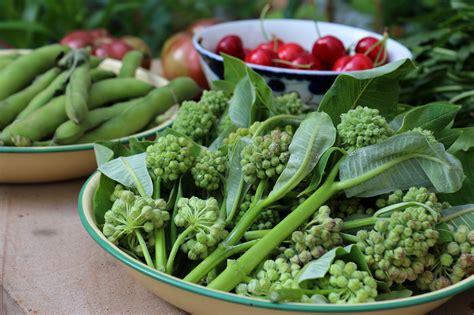weeds you can eat milkweed buds gardenista