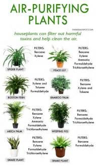 best plants for apartment air quality 25 best ideas about plant rooms on pinterest plants indoor palm house plants and house plants