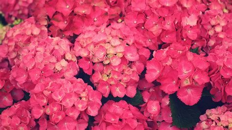 Floral Pink pink flowers wallpaper 1920x1200 51762