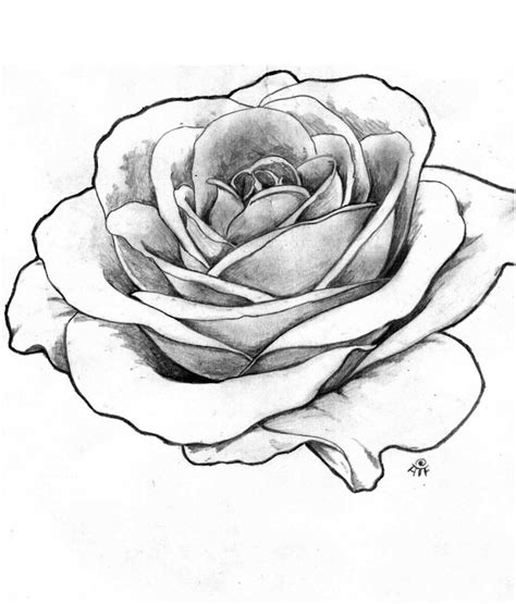 tattoo rose sketch drawing outline roses portfolio