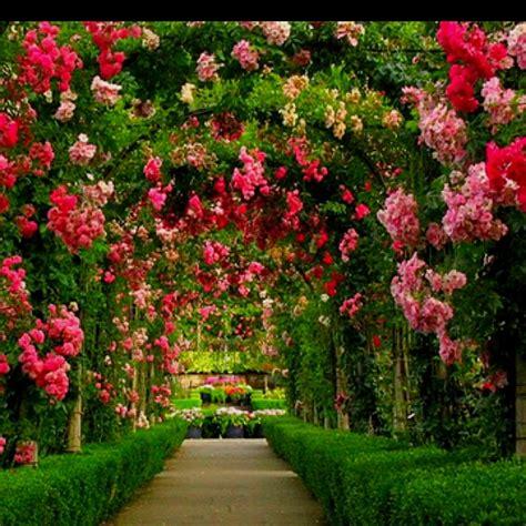 Garten Und Landschaftsbau Rosengarten by 26 Besten Rosengarten Lars Sch 246 Nberg Bilder Auf