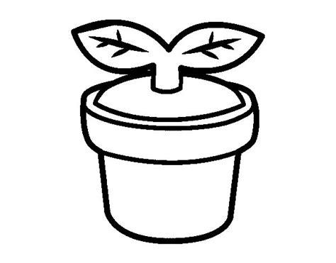imagenes para pintar macetas dibujo de brote para colorear dibujos net