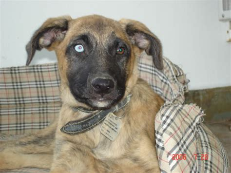 Griechischer Hund Sucht Neues Zuhause