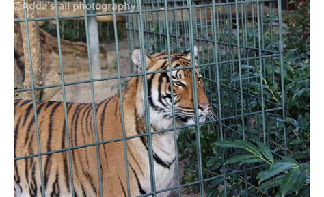 zoologischer garten berlin vegan kopshti zoologjik i berlinit adda s all