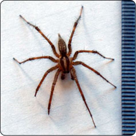 common backyard spiders spiders commonly found in gardens and yards susan masta