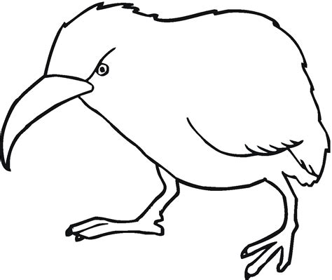 coloring page kiwi bird bird coloring pages
