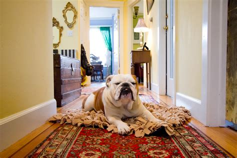 rugs for pets four legged foot traffic tips to help your pets and rugs coexist