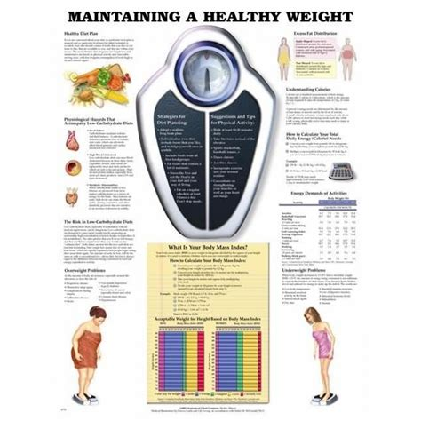 The Weight Is by Maintaining A Healthy Weight Poster Weight Anatomical