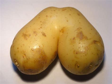 file potato jpg wikimedia commons
