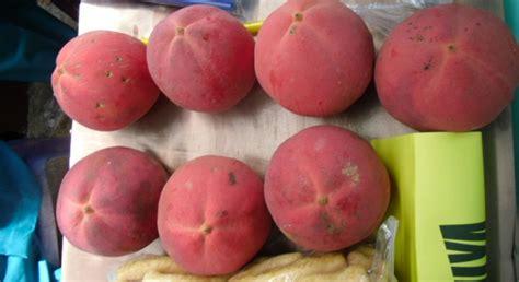 Buah Pepaya Merah buah merah bawean
