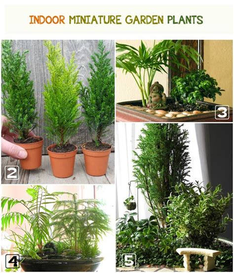 mini indoor garten best plants for miniature gardens resource guide