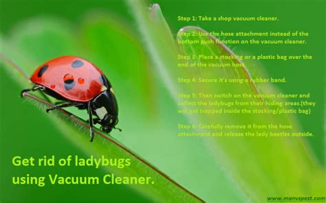 get rid of ladybugs permanently in fast ways