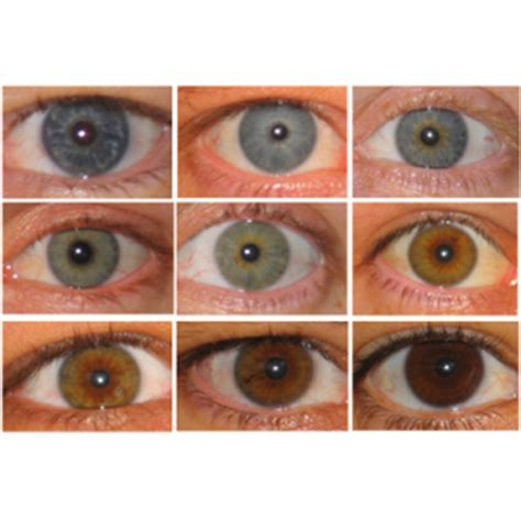 change eye color with honey ancient ritual carrot juice to lighten your