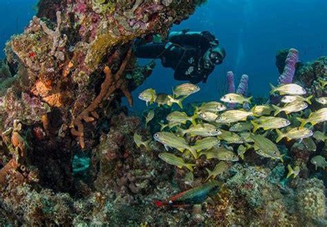 dive travel arquivos golfinhos dive travel
