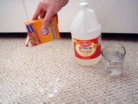 Rug Doctor Cat Urine Best Way To Clean Cat Pees And Smell Out Of Carpet