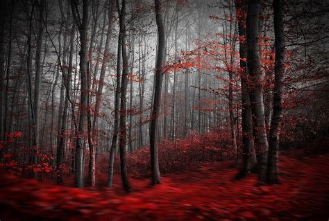 Free Room Designer red carpet forest wall mural amp red carpet forest wallpaper