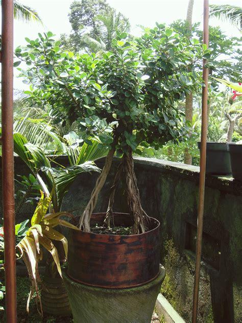 bisnis sampingan pns bisnis tanaman hias