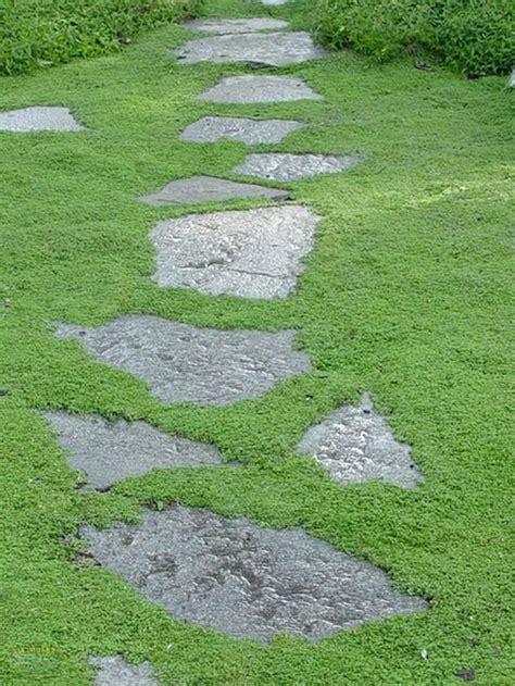 best 25 lawn alternative ideas on grass