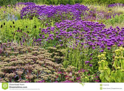 fiori in inglese fiori in giardino inglese fotografia stock libera da