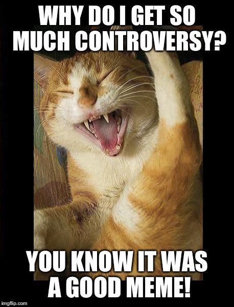 Laughing Cat Meme - laughing cat imgflip
