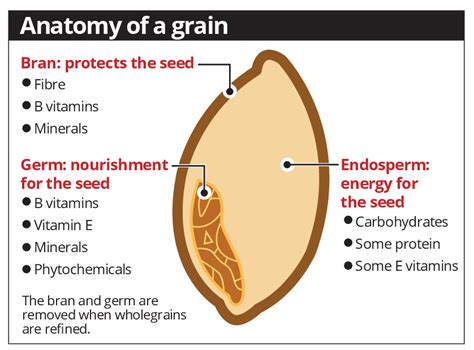 whole grains pdf get the whole grain star2