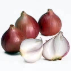 Tanaman Obat Bawang Lanang obat obatan tanaman bawang merah bimbingan