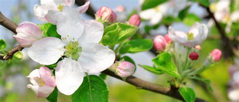 Garten Im April by Der Garten Im April Garten Europa