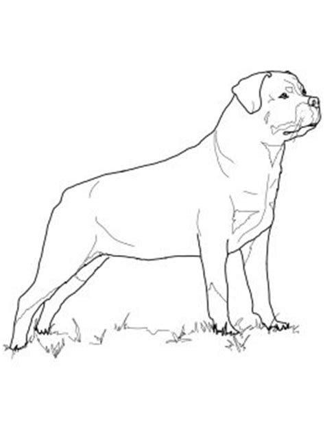coloring pictures rottweiler dogs rottweiler dog breed coloring pages coloring pages