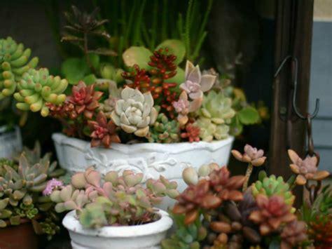 tips  growing succulents indoors   winter