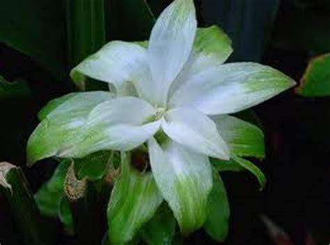 fiori di colore verde colore verde e bouquet cerimonia nuziale forum