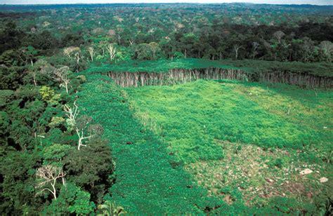 cadena trofica bosque boreal 358 191 qu 233 futuro le espera a la biodiversidad escenarios