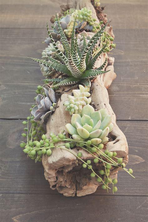 succulent arrangements succulent driftwood arrangement by howladventures com