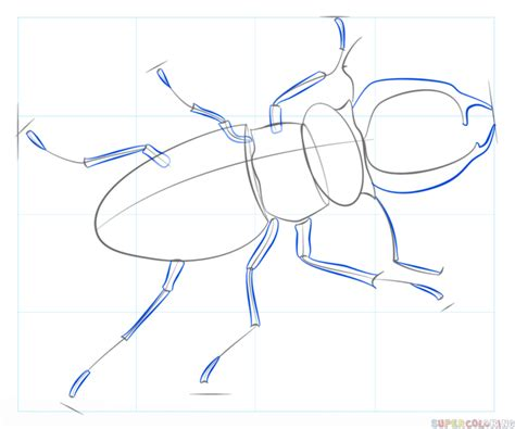 How To Draw A Beetle