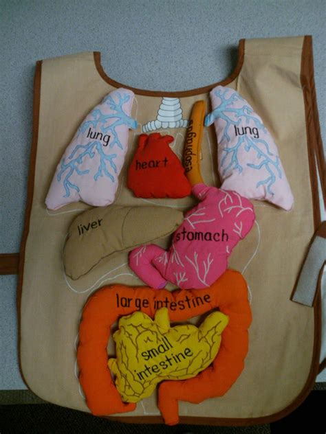 human crafts for human science lesson human food and bodies