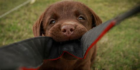how to stop your puppy from biting you 5 foolproof tips to help stop your puppy from biting you