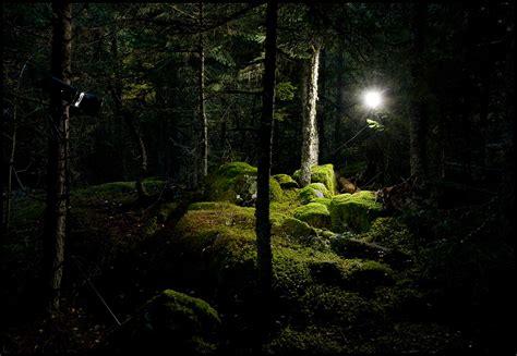 imagenes de jardines nocturnos on bosques nocturnos